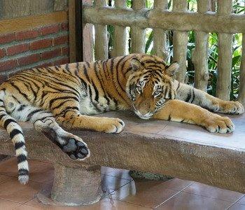 4H3M Malang-Taman Safari Indonesia 2 Prigen 2 Can Go