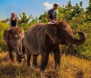 4H3M Bali Zoo