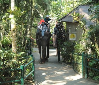 3H2M Bali Rafting Elephant Ride
