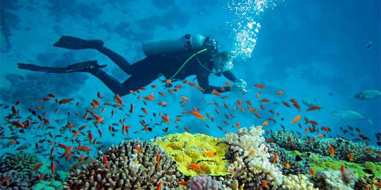 5D Open Trip Underwater Maratua Dive Tour