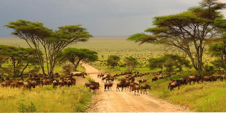 5D Lihat Kruger National Park Africa