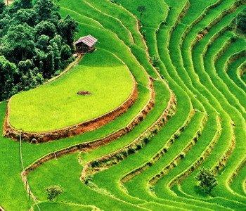 3H2M Bali Jatiluwih Rice Terrace