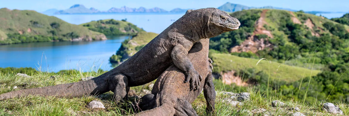 3D/2N Favourite Komodo Trails 1 Night on Board and 1 Night in Hotel