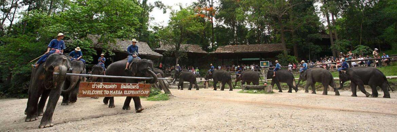 4D/3N Favourite Amazing Chiang Mai with Doi Suthep Mountain Temple  Elephant Camp Art Work