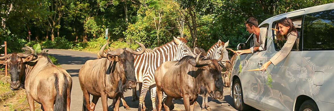 4D/3N Favourite Malang – Taman Safari Indonesia 2 Prigen Tour
