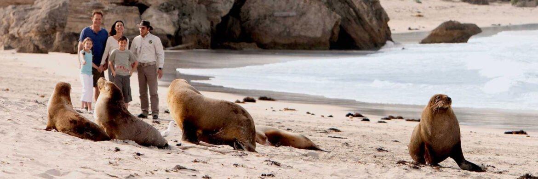 5D/4N Favourite Adelaide  Kangaroo Island Experience
