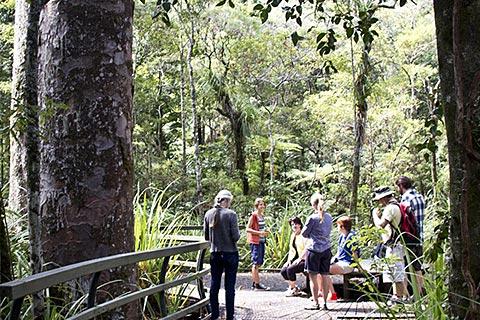 Adventures Puketi Eco Tours – Night Forest Walk / Full Day Guided Walk