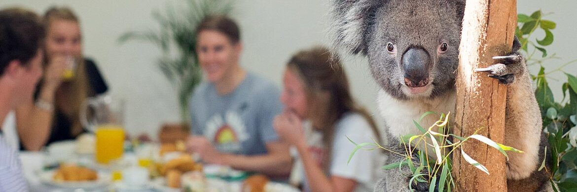 Hartley^s Breakfast with the Koalas from Cairns