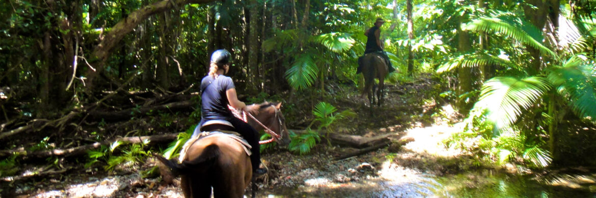 Half Day Horse Riding from Cairns