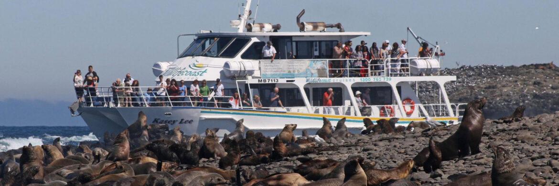 Half Day Seal Watching Cruise