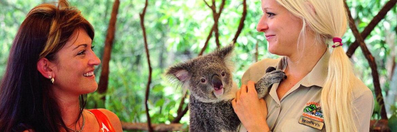 Hartley^s Breakfast with the Koalas from Port Douglas