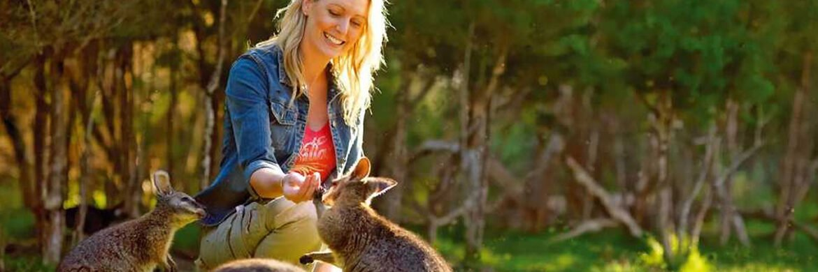 Koalas and Kangaroos in the Wild Experience from Melbourne