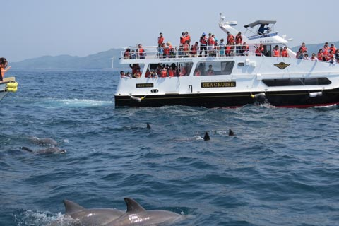Kyushu Experience – Battleship Island Gunkanjima Cruise / Dolphin Watching in Amakusa / Kimono Rental /  Tea Ceremony / more