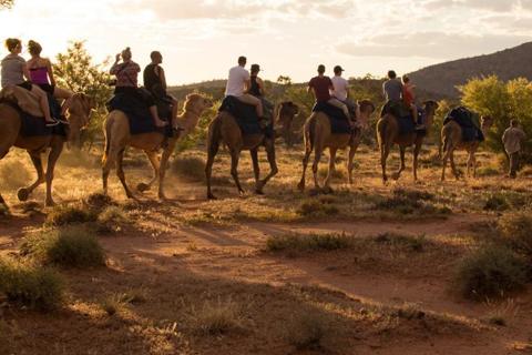 1 Hour Camel Ride Experiences