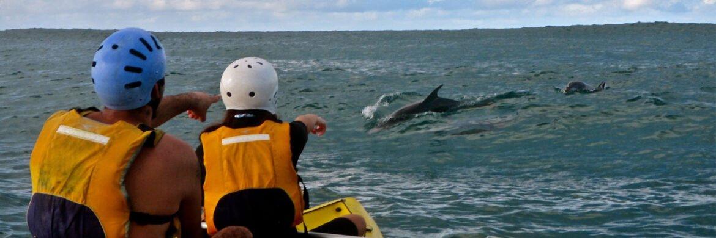 3 Hour Dolphin Kayak Tour- AM