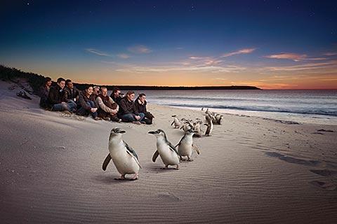 Phillip Island Experience – Penguin Parade/Koala Conservation/Seal Rock