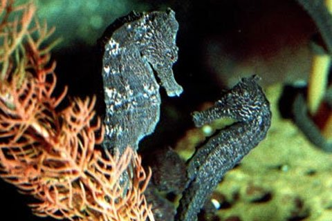 Seahorse World Fully Guided Tour