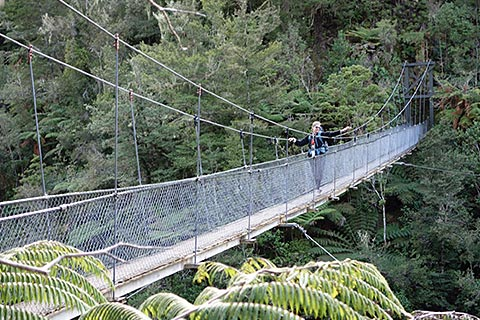 Swing Bridge, Bush Walk Dan Cruise