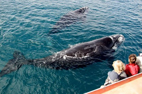 Whale Watch Cruise from Sydney